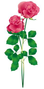 장미 꽃 2