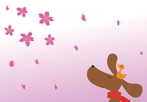 櫻花,狗和鳥