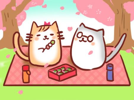 꽃놀이 고양이 부부