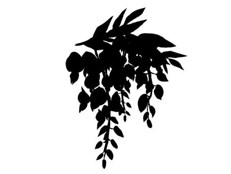 등나무 꽃 실루엣
