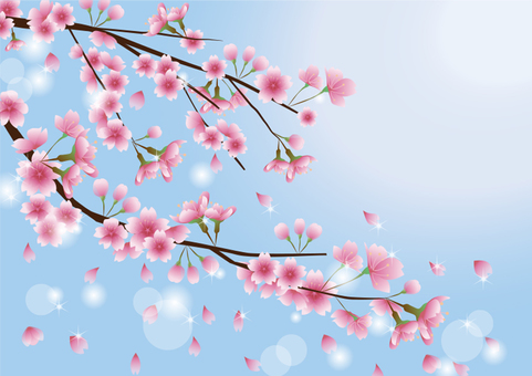 Sky and cherry tree