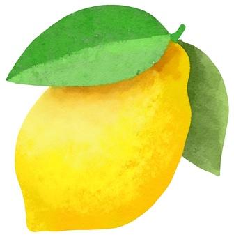 Watercolor food series lemon