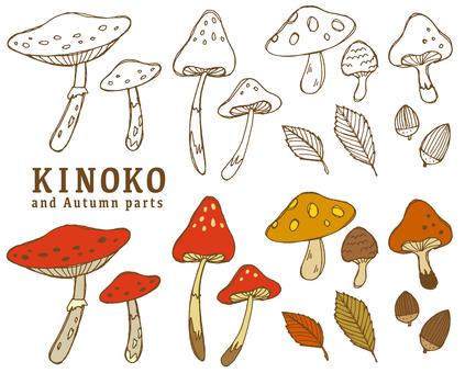 Mushrooms and autumn parts