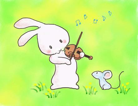 바이올린 토끼 20