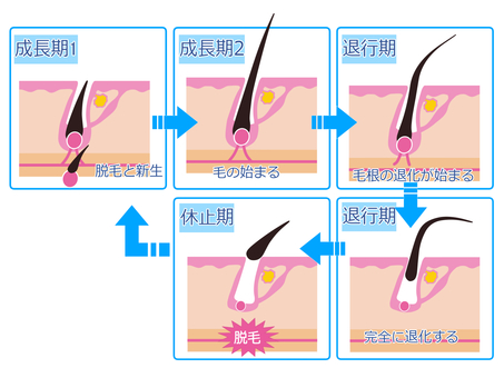 Epilation cycle