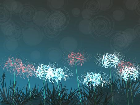 A cluster amaryllis of night