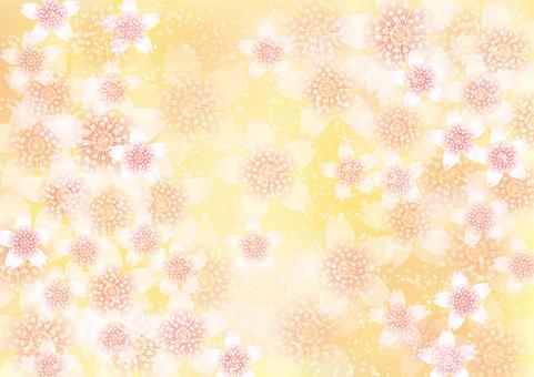벚꽃의 꽃 167