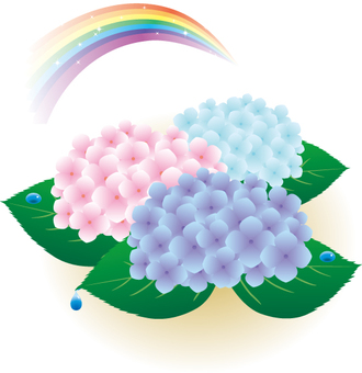A hydrangea and a rainbow