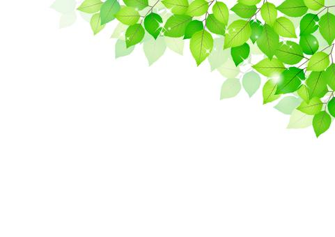 Fresh green material 218