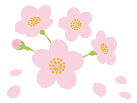 Sakura up