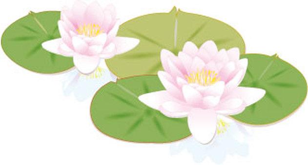 f_ lotus flower