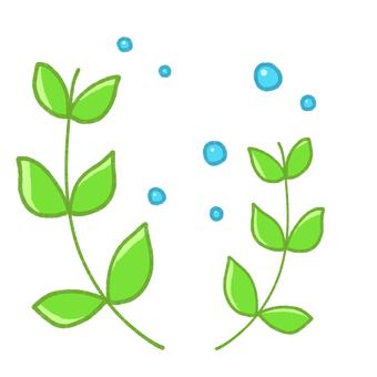 나뭇잎과 물방울