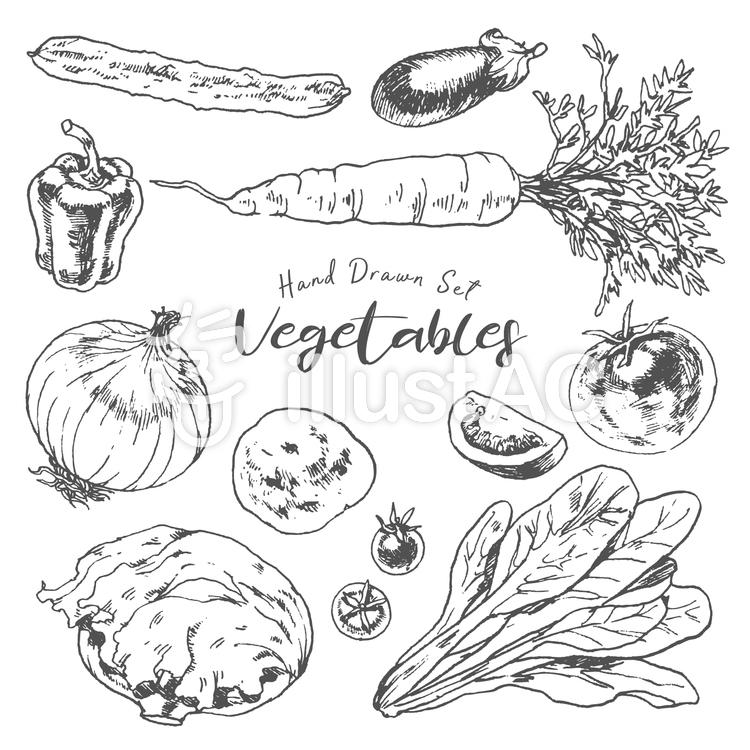 野菜手描きイラストイラスト No 850357無料イラストならイラストac
