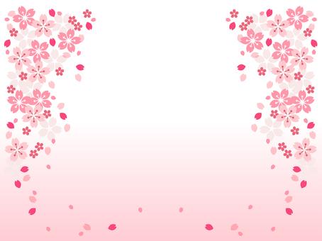 Sakura 116