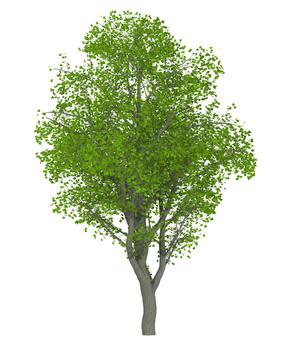 Trees _0002_02
