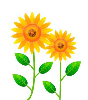 A sunflower illustration
