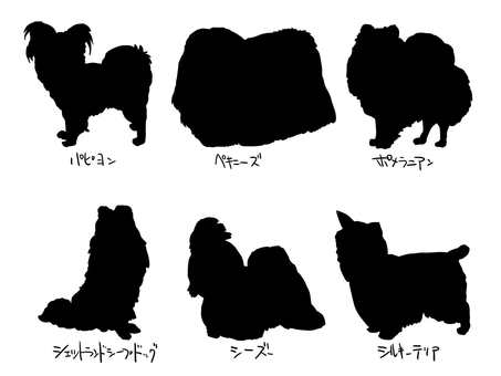 Shih Tzu Pomeranian