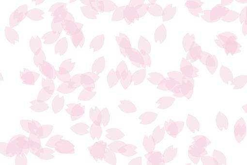 Cherry blossom petals 32