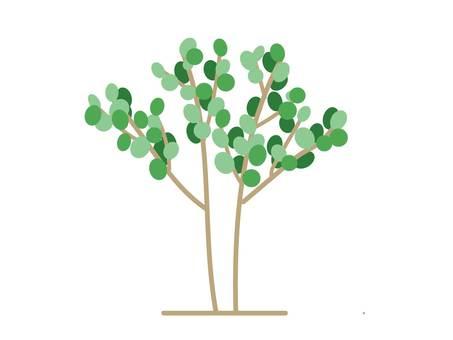 ユーカリ樹木