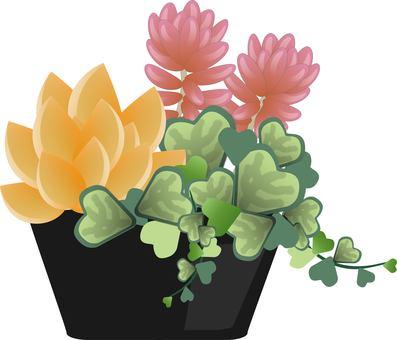 다육 식물 제기 설치 2