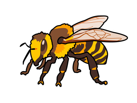 Animal_insect_honey bee