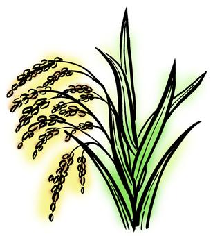 Inaho rice