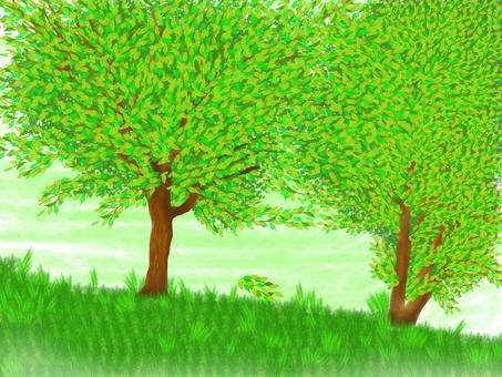 Tree natural landscape green