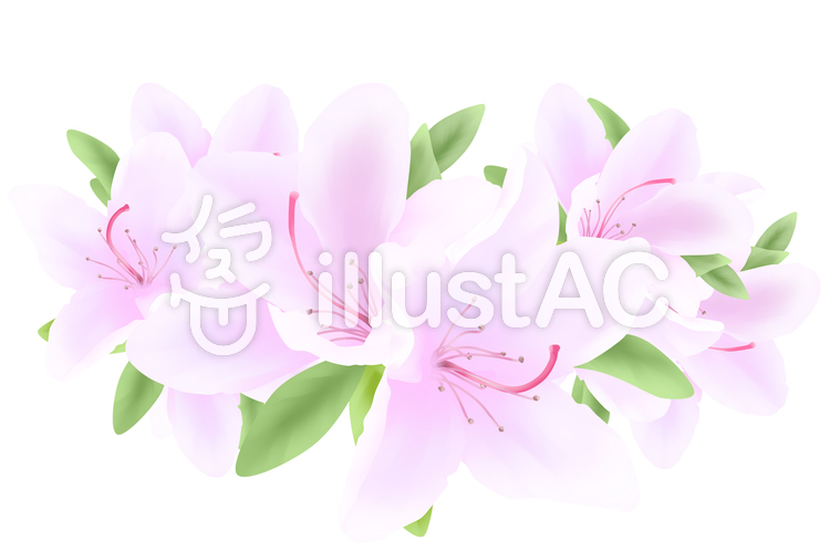 【フリーイラスト素材】お花・ツツジの花2