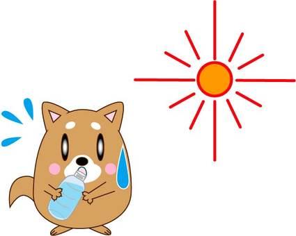 水分補給・犬