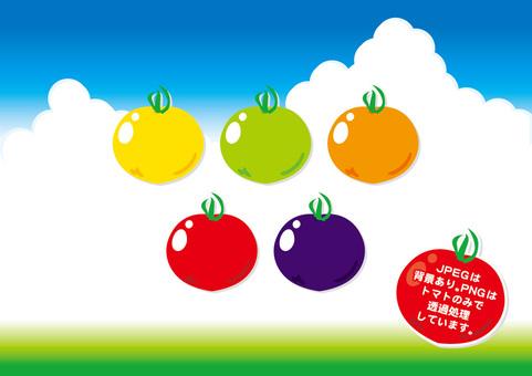 Tomato color variation