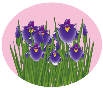 Flower - iris (shoumu) - 12
