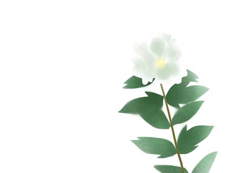 Hibiscus (フ ヨ ウ) 11