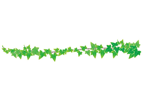 Ivy Line