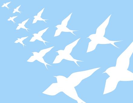Swallows _ flock _ white