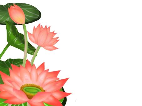 Lotus flower ③