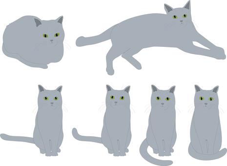 Animal cat (gray)