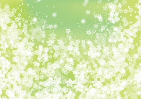 Sakura 18 - Green