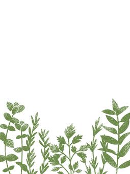 Herbal frame 001
