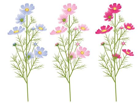 가을의 꽃 코스모스 자르기 06