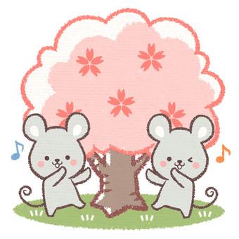 꽃놀이 쥐