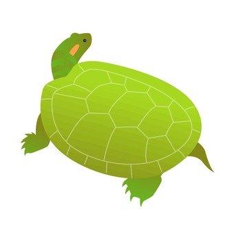 Turtle 10