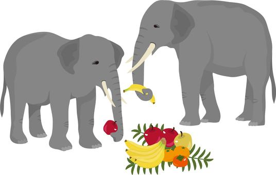 Elephant fruit