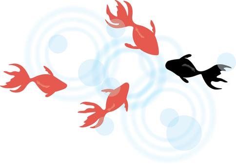 Illustrations free goldfish goldfish