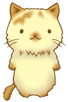 Longhair cat _ front