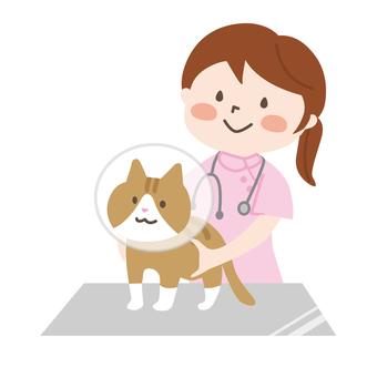動物の看護師