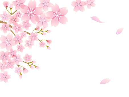 200201.Sakura12
