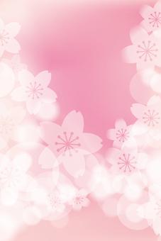 Sakura 12