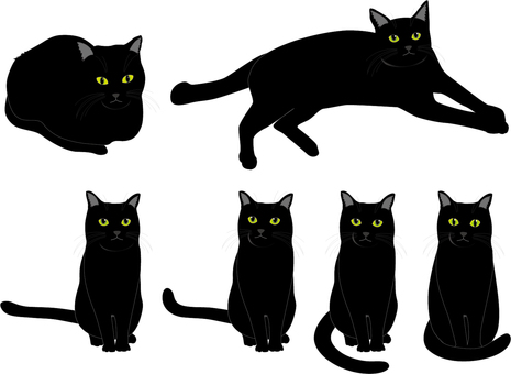 Animal cat (black)