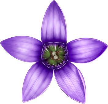 Flower of Onoe dragon