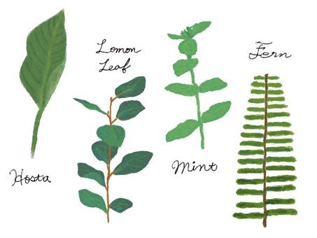 手描きの植物